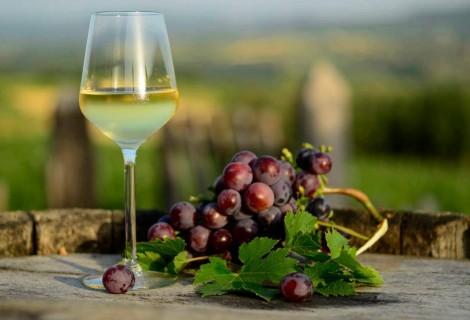 Serbia Wine Tour