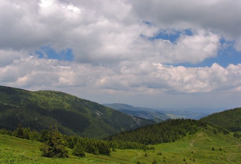 Medicinal Herbs of Kopaonik Mountain