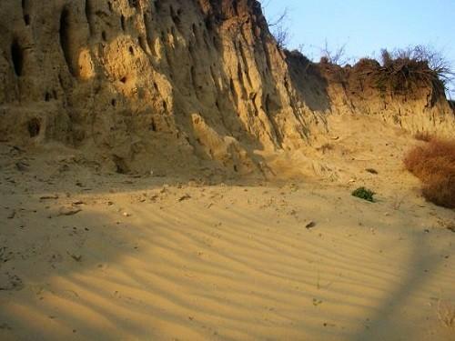 Deliblato Sands Special Nature Reserve