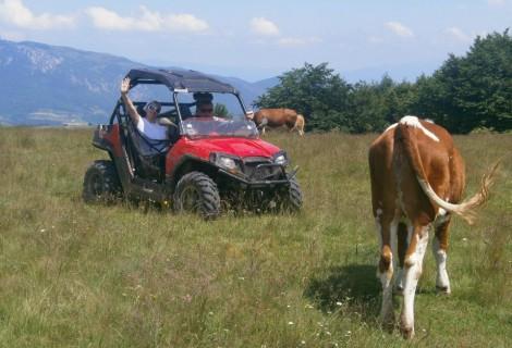 Farma Kolibe Vlasko polje Rural tourism 136