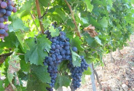 Serbia Wine Tour – Dionysos Trails