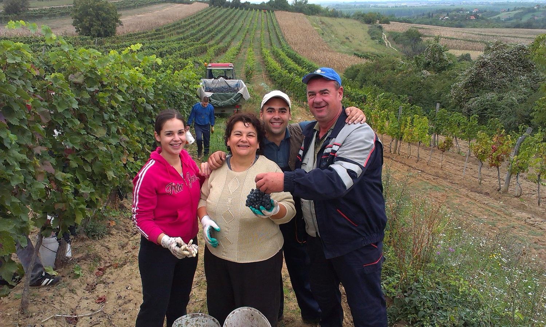 Vinogradi Urosevic Winery Banostor