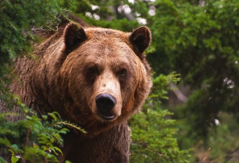 Bear Watching Serbia – Outdoor Adventures