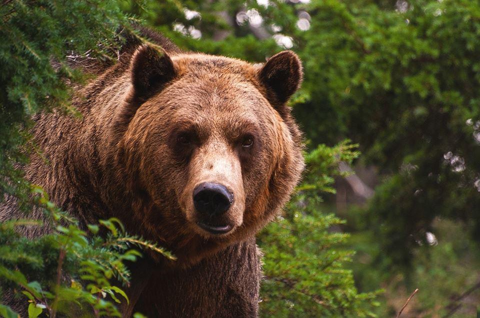 Srbija Wildlife Ture – posmatranje medveda i avanturizam u prirodi