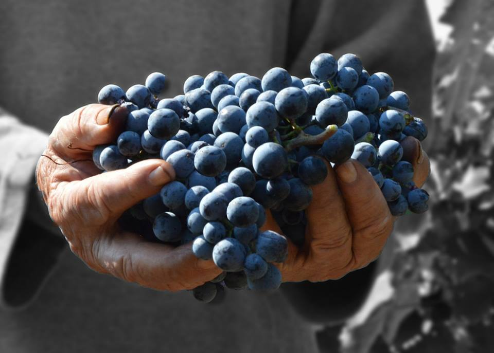 Despotika Winery Smederevska Palanka