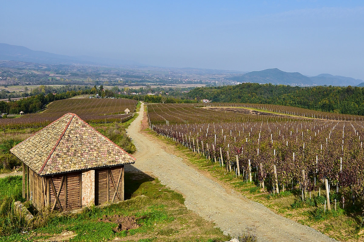 Toplicki vinogradi Winery Prokuplje