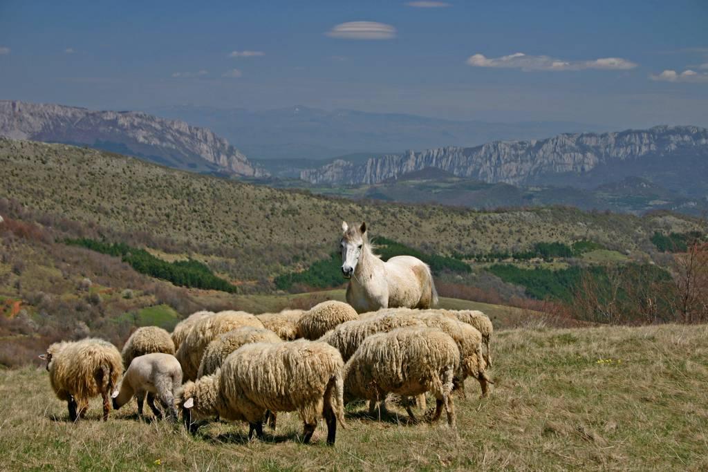 Osvrt na Srbiju, Makedoniju i Bugarsku