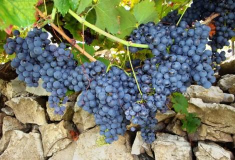 Srpski manastiri, vina i gastronomija 2