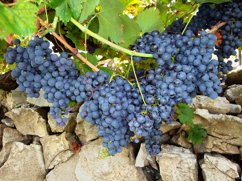 Monasteries, Wines and Gastronomy of Serbia 2