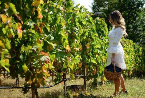Grabak Winery Vrnjacka Banja Spa
